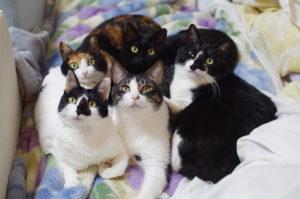 変顔猫リュックと愉快な仲間たち